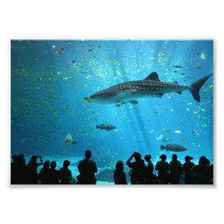 Tiburón de ballena masculino fotografías