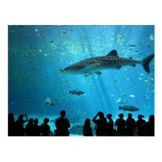 Tiburón de ballena masculino postal