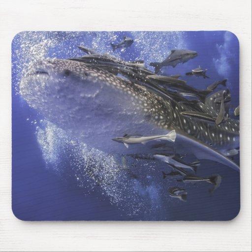 Tiburón de ballena subacuático tapete de raton