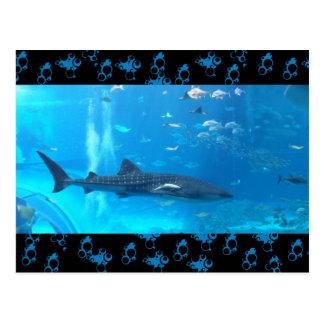 tiburón de ballena postal