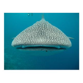 Tiburón de ballena, vista delantera, cara tarjetas postales