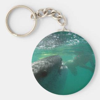 Tiburón de ballena y nadador llavero