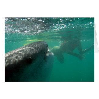 Tiburón de ballena y nadador tarjeta de felicitación