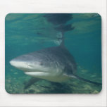 Tiburón de Bull - leucas del Carcharhinus Tapete De Ratones