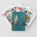 Tiburón de Bull - naipes de los leucas del Carchar Cartas De Juego
