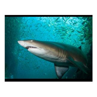 Tiburón de enfermera gris postal