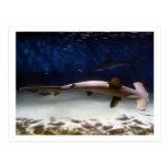 Tiburón de Hammerhead horneado a la crema y con Tarjeta Postal