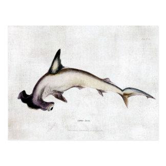 Tiburón de Hammerhead Postales