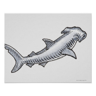 Tiburón de Hammerhead Póster