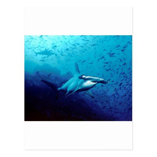 Tiburón de Hammerhead Tarjeta Postal
