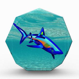 Tiburón de la piscina
