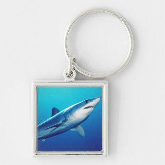 Tiburón de Mako de Shortfin Llavero Cuadrado Plateado