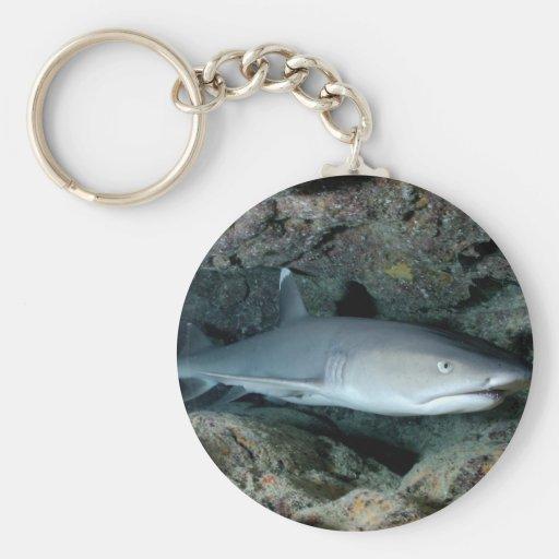 Tiburón de Silvertip Llavero Redondo Tipo Pin