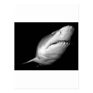 Tiburón de tigre de arena tarjeta postal