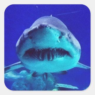 Tiburón de tigre pegatina cuadrada