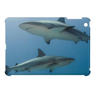 Tiburón del Caribe del filón