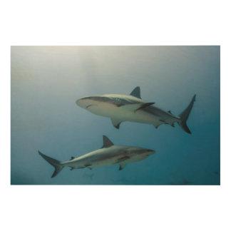 Tiburón del Caribe del filón Cuadro De Madera