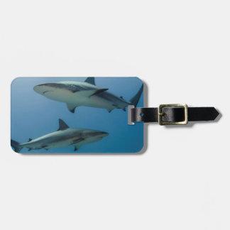 Tiburón del Caribe del filón Etiquetas De Equipaje