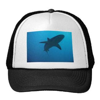 Tiburón del Caribe del filón Gorra