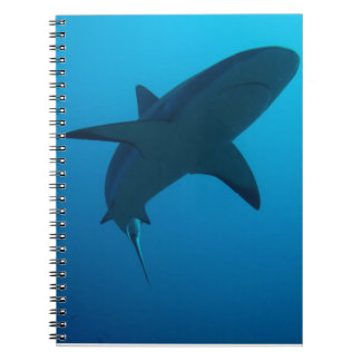 Tiburón del Caribe del filón Cuadernos