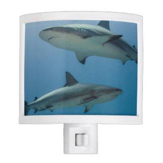 Tiburón del Caribe del filón Luz De Noche