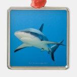 Tiburón del Caribe del filón (perezi del Adorno Navideño Cuadrado De Metal