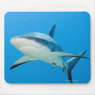 Tiburón del Caribe del filón (perezi del Carcharhi Tapetes De Ratones