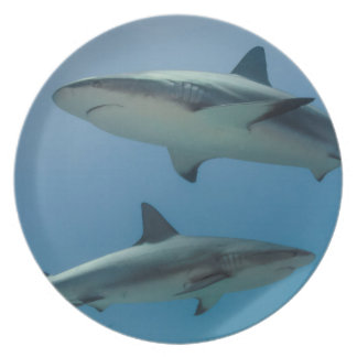 Tiburón del Caribe del filón Platos De Comidas