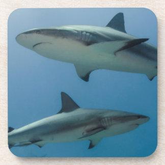 Tiburón del Caribe del filón Posavasos