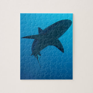 Tiburón del Caribe del filón Puzzles Con Fotos