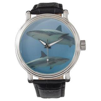 Tiburón del Caribe del filón Reloj De Mano