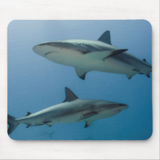 Tiburón del Caribe del filón Tapetes De Ratón
