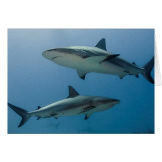 Tiburón del Caribe del filón Tarjeta De Felicitación