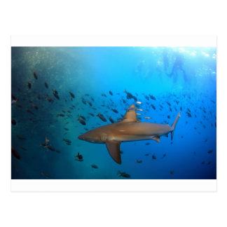 Tiburón del filón de las Islas Galápagos Postal