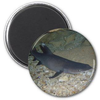 Tiburón del filón de Whitetip Imán Redondo 5 Cm