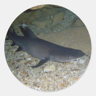 Tiburón del filón de Whitetip Pegatina Redonda