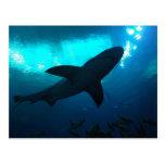 Tiburón en el acuario de Georgia