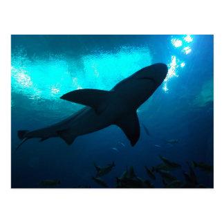 Tiburón en el acuario de Georgia Postal