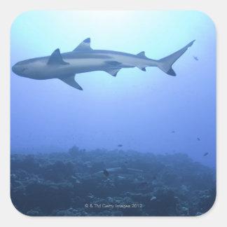 Tiburón en el océano, opinión de ángulo bajo pegatina cuadrada