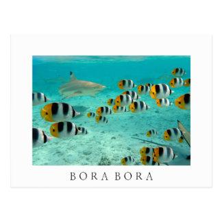 Tiburón en la postal blanca del texto de Bora Bora