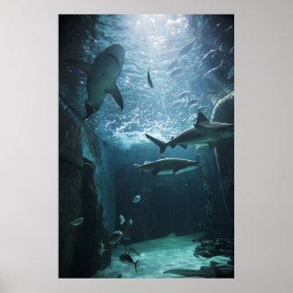 Tiburón en un acuario póster