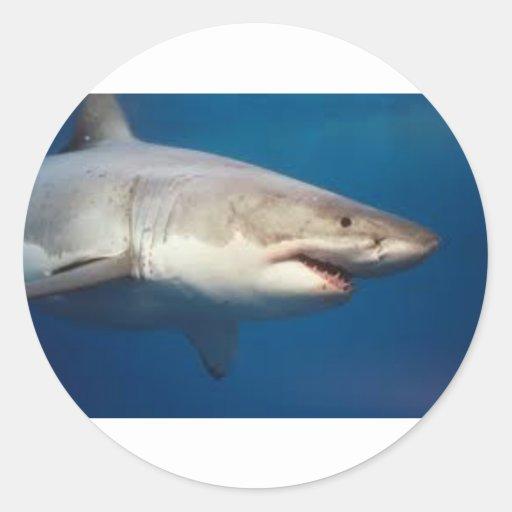 tiburón etiquetas redondas