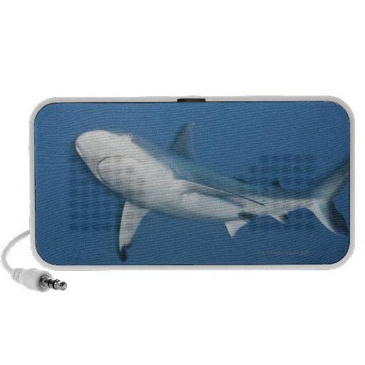 Tiburón gris del filón (amblyrhynchos del Carcharh Mini Altavoces