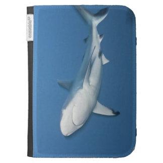 Tiburón gris del filón (amblyrhynchos del Carcharh