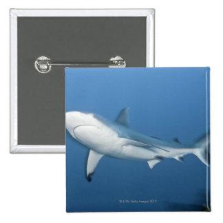Tiburón gris del filón (amblyrhynchos del Carcharh Pin