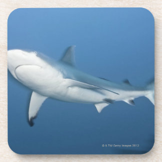 Tiburón gris del filón (amblyrhynchos del Carcharh Posavasos