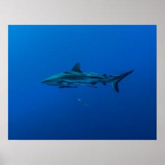 Tiburón gris del filón en el poster del filón de