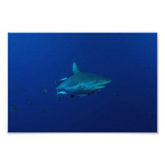 Tiburón gris del filón en la gran barrera de coral fotografía