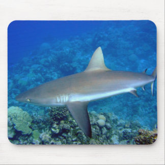 Tiburón gris del filón mousepads