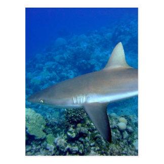 Tiburón gris del filón postal